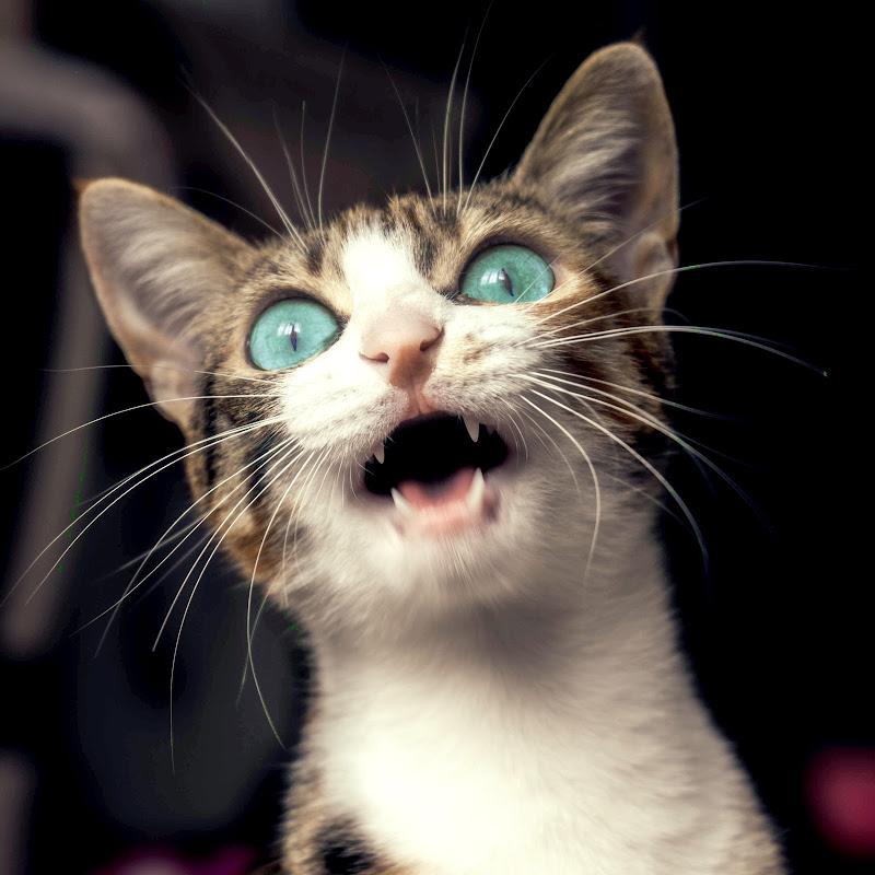 I'm kitting!