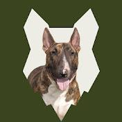 Fenrir Bull Terrier Show