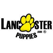 Lancaster Puppies