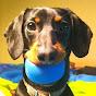 Crusoe the Dachshund