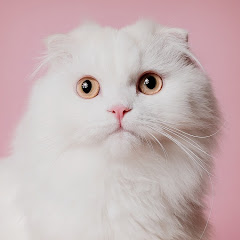 써니포캣 sunny4cats