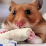 TinyHamsterOfficial