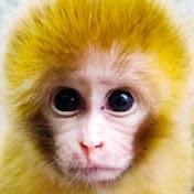 Newly Monkey Tube net worth