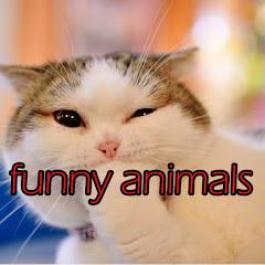 funny animals TVS