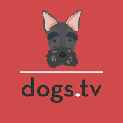 dogs tv