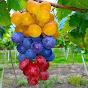 Periódico EL ESPINAL